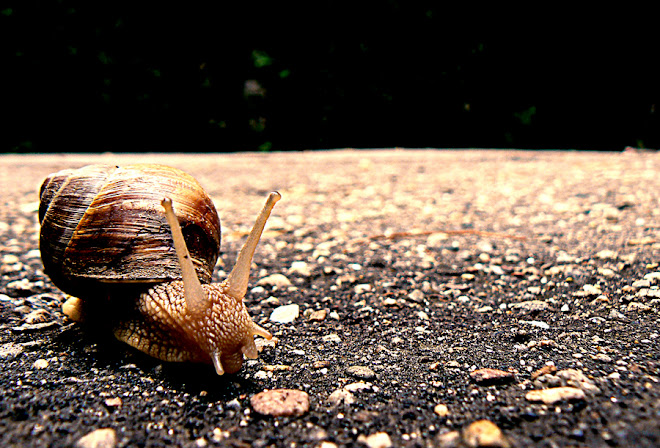 snail in the city part 1