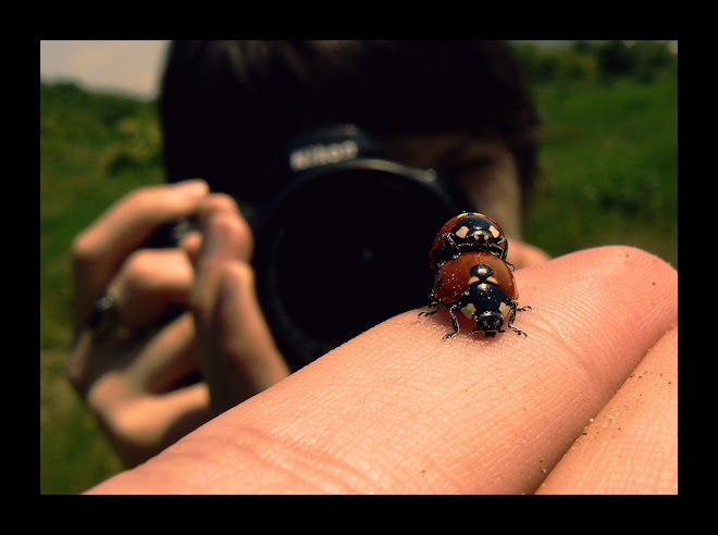 ladybugs gone wild