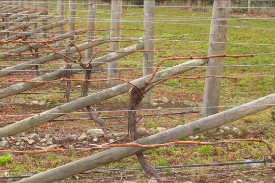 Así se ve cuando ya hemos hecho el trabajo en los viñedos