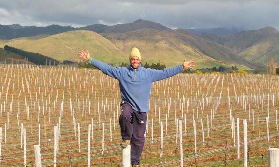 Me despido de los viñedos de Blenheim para continuar con mi viaje por la Isla Sur de Nueva Zelanda
