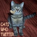 Meet Cats Who Twitter