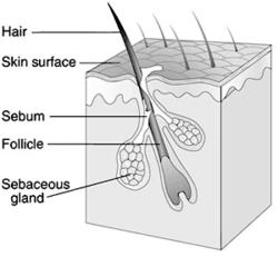 Forensics History Of Hair Fiber Analysis And Hair Diagram