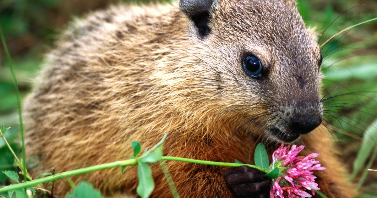 Green in Lafayette Square: How much wood could a woodchuck ...