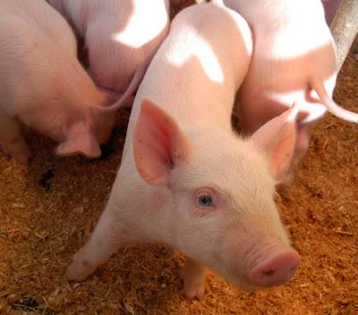 how to speak pig latin swear words