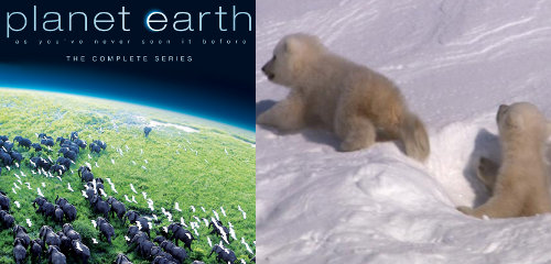 BBC Earth offers free Planet Earth episode download on iTunes ~ This