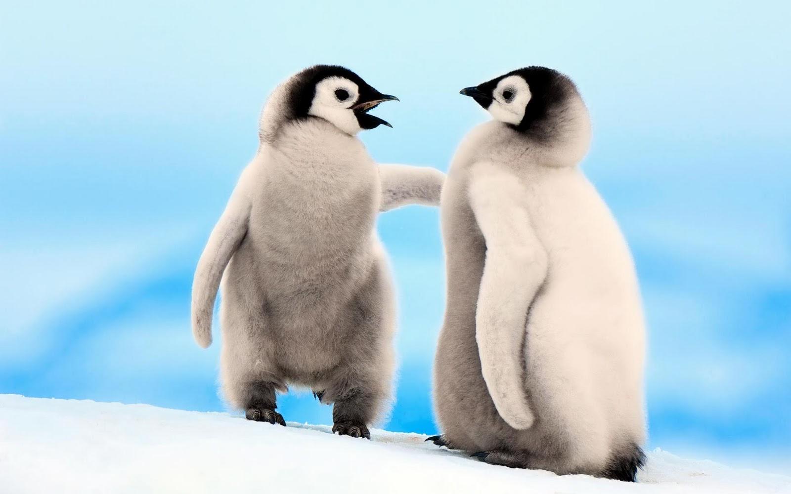 penguin - photo #2