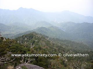 Tachu dake trail on Yakushima