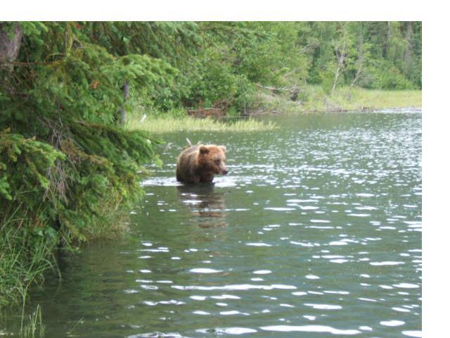 [bear3]