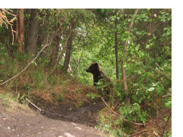 [bear1]