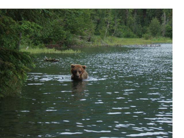 [bear4]