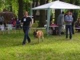 eu, cu foxe la show-ul cacib din timisoara