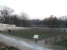 Vignes d'Epinay sur Seine