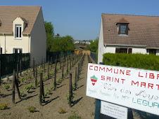Vignes de Pontoise