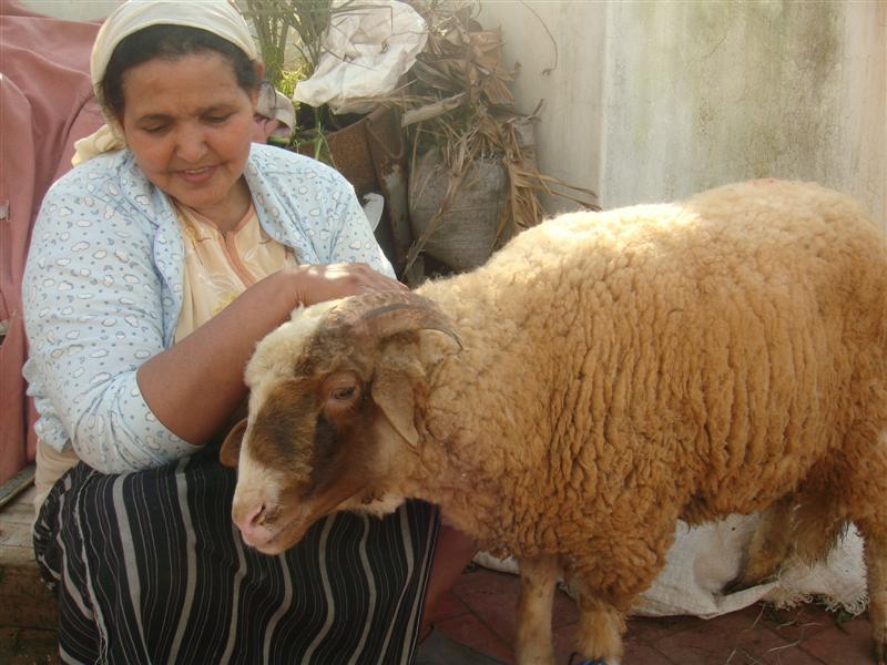 acheter un mouton tabaski ou a d el kabir sens et significations quel mouton acheter comment. Black Bedroom Furniture Sets. Home Design Ideas