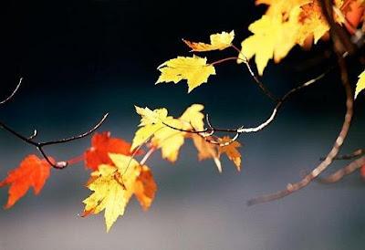 Fotografia colori autunnale: foglie