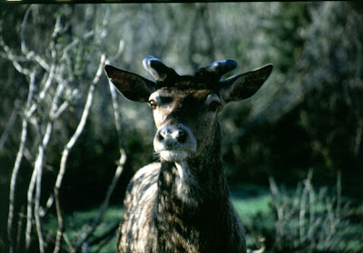 Le quart des espèces européennes menacées