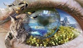 Miradas de la Naturaleza