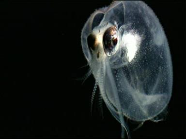 Unduh 670 Gambar Ekosistem Laut Dalam Terbaru HD