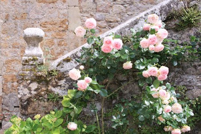 Roses At Beduer Painting Holidays In Chateaux In South West