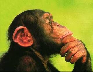 mono-pensando.jpg
