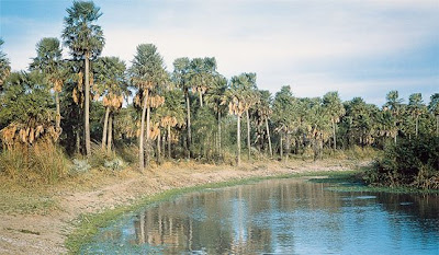 Parque Nacional Río Pilcomayo 2