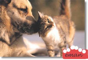 رومانسية جديد 2cat-dog.jpg