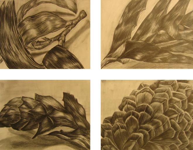 Su Kim, study of organic form, graphite on paper, 2007