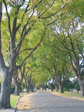 an avenue