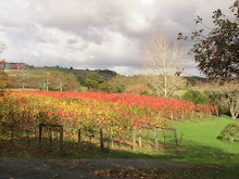 Autumn vineyard 1