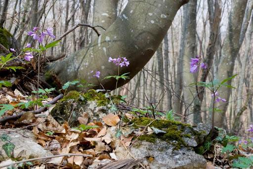 Лес в районе Красноселовки