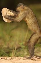 Monkey See, Monkey Do....