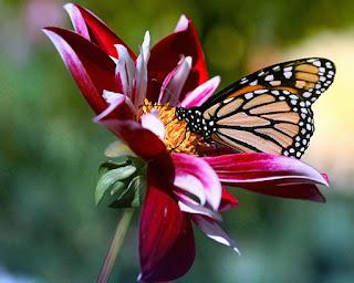 primavera+mariposa