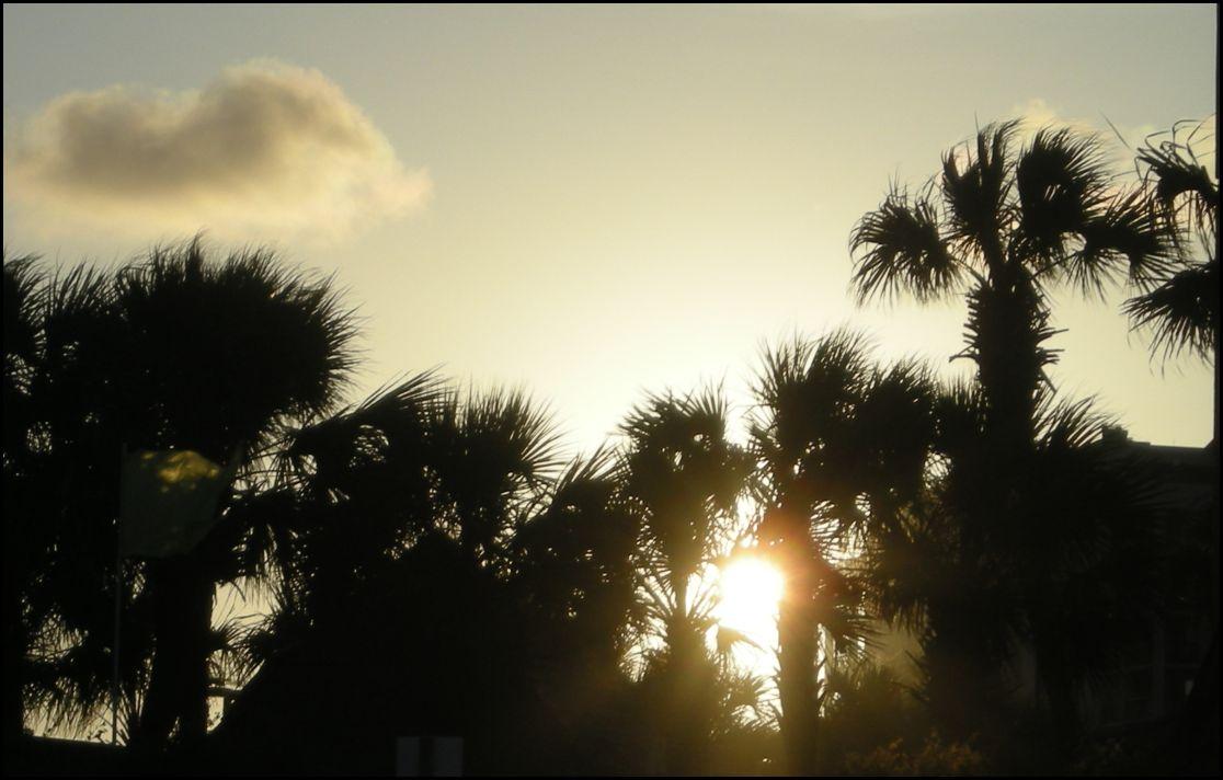 [Palm+trees.jpg]