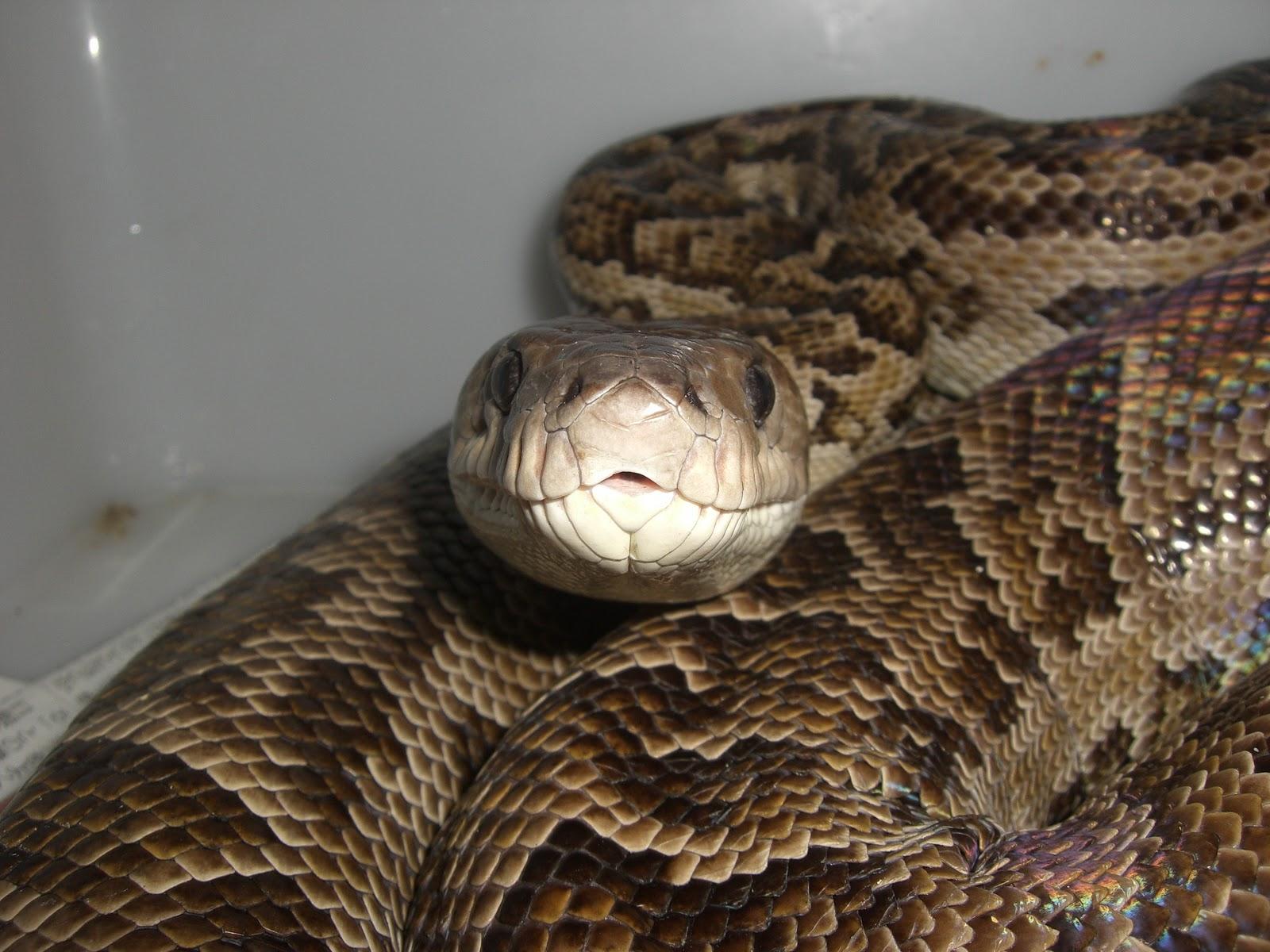 部屋と蛇様と私