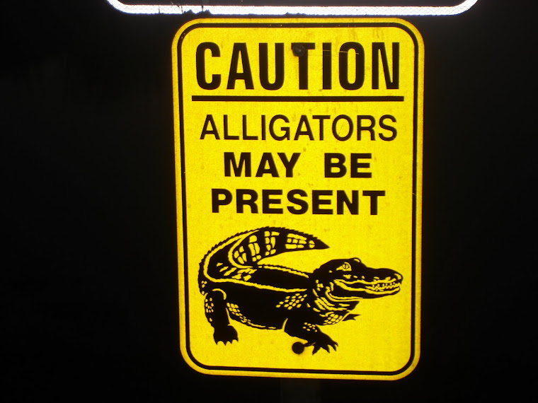 i am your alligator!!!