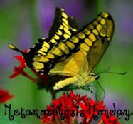 What is Metamorphosis Monday? Click below for the details.