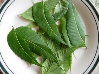 Image result for daun semambu