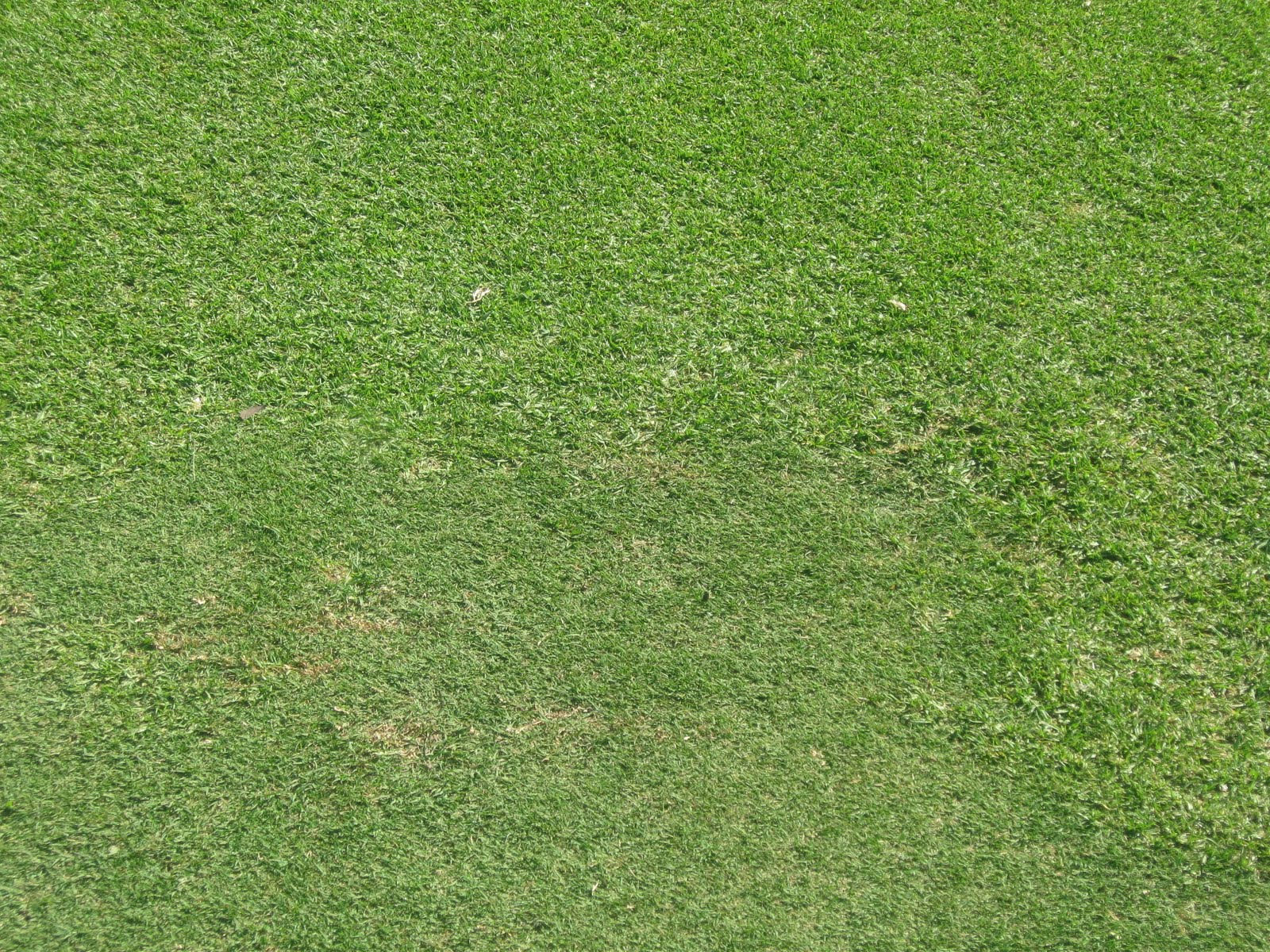 Northbridge Golf Club Course Maintenance: Turfing patches ...