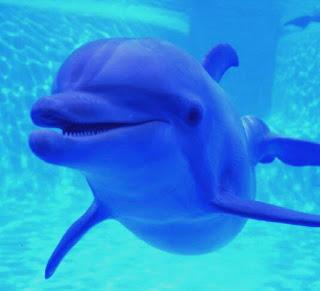 8-8-8 Activacion de los Filamentos Delfinicos en Nuestro ADN 1