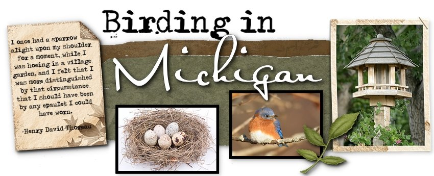 Birding In Michigan