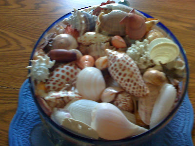 Bowl full of sea shells with junonia sitting on top.