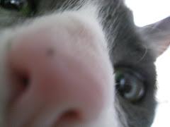 Idgy the Cat