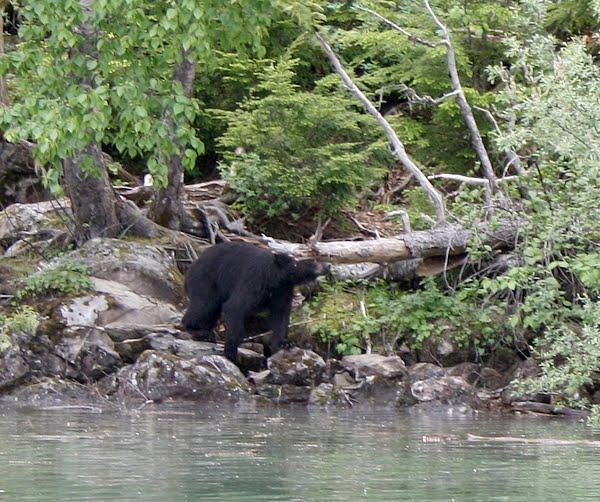 voir des ours à banff
