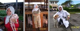 Sumber Informasi Islam Terkini Hukum Memegang Babi Anjing