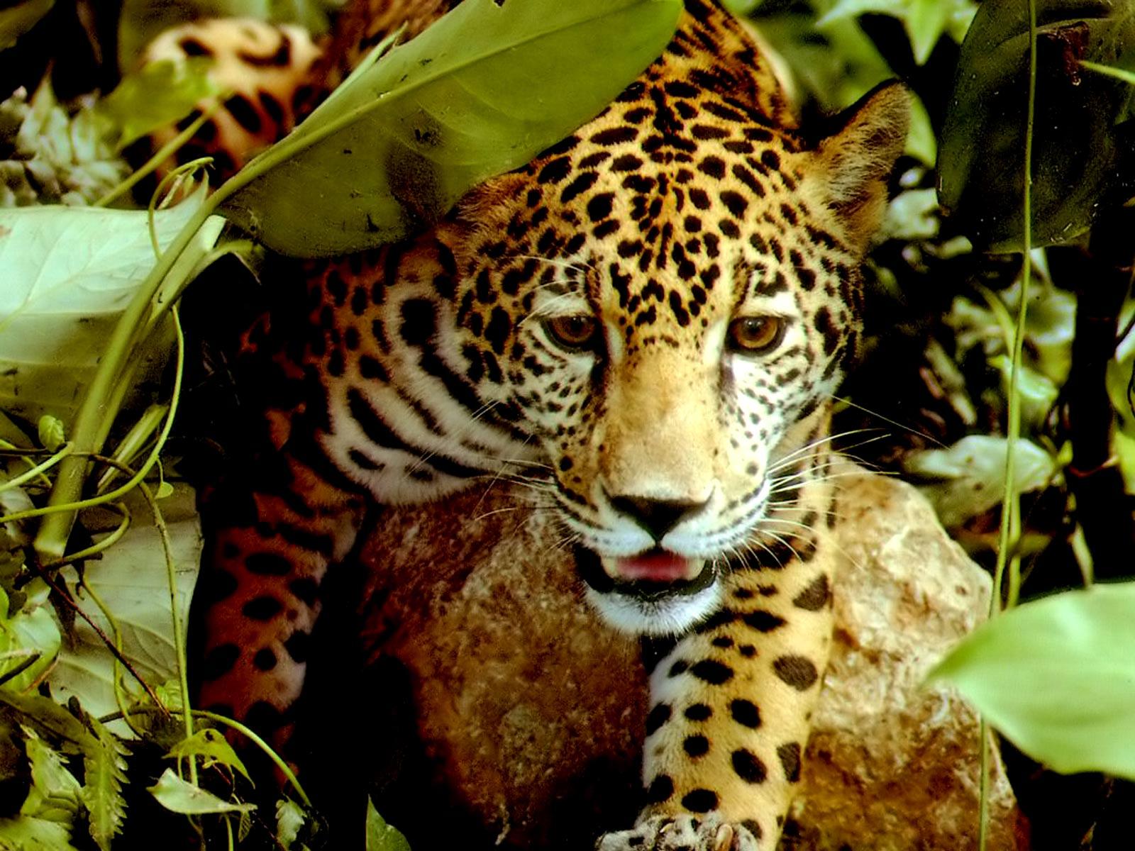 [Jaguar.jpg]