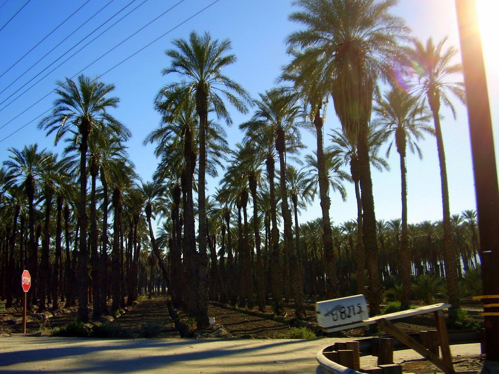 Jupiters Travels W Bmw Agua Caliente Palm Springs Via