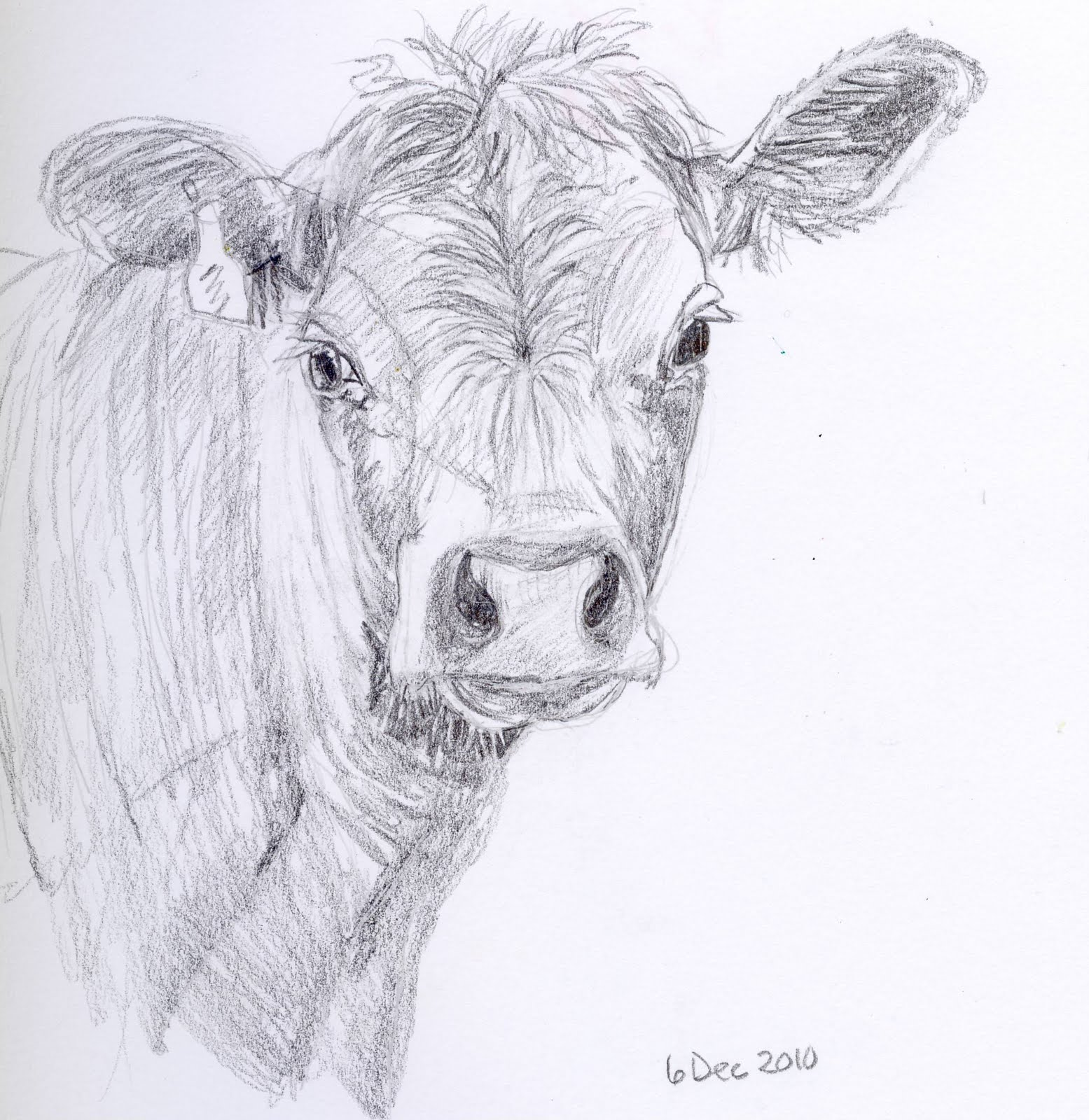 how to draw a realistic cow face