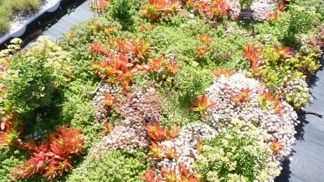 Green Roofs Eco Luxury Amp Sustainable Building Globally