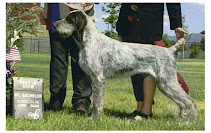 The first Dual Champions/Best in Show German Wirehair