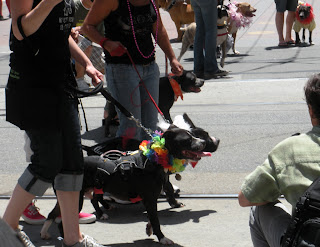 San Francisco Pride - pitbulls